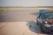 Dzik na tle lotniska w Debrznie